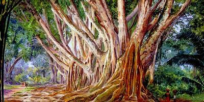Avenue of Indian Rubber Trees at Peradeniya, Ceylon olio su tela di Marianne North (1830-1890)