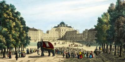 Enrico Gonin - Reale Castello di Stupinigi con elefante Fritz (1836). Litografia di D. Festa - Collezione Simeom (Archivio Storico della Città di Torino)